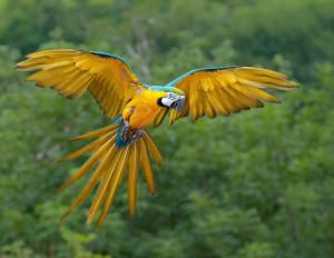 Unser neuer Gastdisputent Polly, das fliegende EInhorn. Foto von